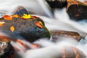 Felsen und Blätter in einem Bach foto