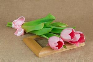 drei rosa Tulpen mit Satinband auf dem Rahmen liegend foto