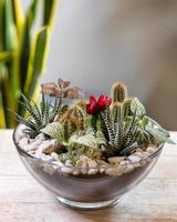 schönes Terrarium mit Sukkulenten, Kakteen und Blumen