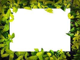 leere weiße Leinwand auf grünem Laub foto