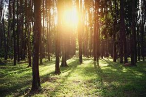 schöner Wald mit hohen Bäumen foto