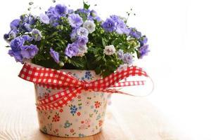 Campanula Blumen foto