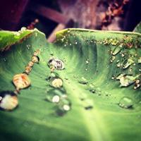 Tropfen auf Blätter