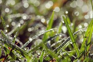 Wassertropfen auf dem Gras verwischten natürlichen Hintergrund foto