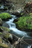 gebirgsbach im urwald von feuerland foto