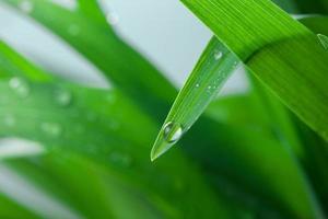 Wassertropfen auf dem grünen Gras Nahaufnahme