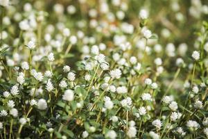 wilde Kugel ewige Blume