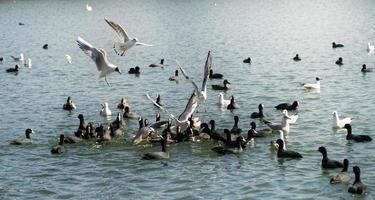 Vögel, die sich vom Seewasser ernähren foto