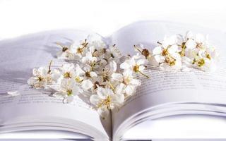 Frühlingsblüte über Buch foto
