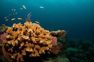 die Riffe am Meer von Cortez