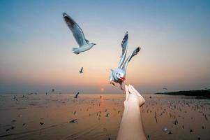 Möwe im Meer, Thailand foto