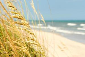 Blick auf den Strand mit Seehafer im Vordergrund foto