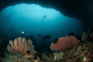 Taucher, Seefächer in Ambon, Maluku, Indonesien unter Wasser foto
