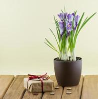 Krokusblüten in einem Topf mit Geschenkbox und Herzen foto