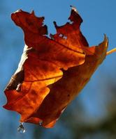 automne foto
