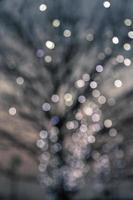 defokussierte Nachtlichter auf einem Laubbaum