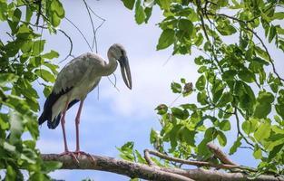 ein Vogel, der auf einem Ast steht