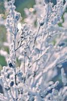 schöne schneebedeckte Äste eines Baumes