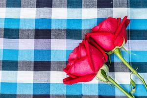 rote Rose mit kariertem Stoffhintergrund foto