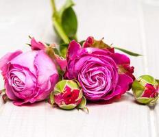 Rosenblume auf weißem hölzernem Hintergrund. foto