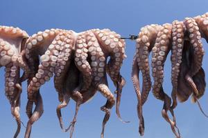 frisch gefangener Calamari, der in Sonnenparos trocknet - Griechenland (xl) foto