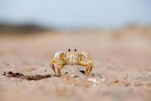 Krabbe stehend