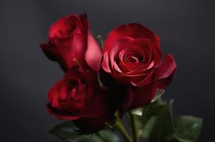 perfekte Rosen