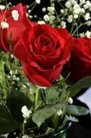 erstaunliche Rose foto