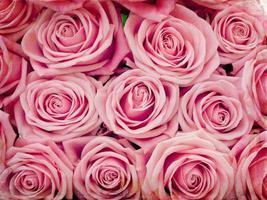 pinke Rose foto