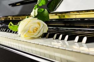 Klavierrose foto