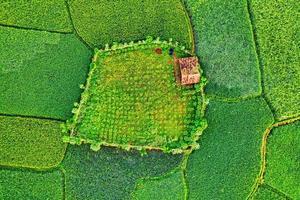 grünes und gelbes strukturiertes Land