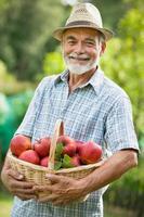 älterer männlicher Gärtner mit Korb reifer Äpfel