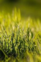 Gras im Frühjahr