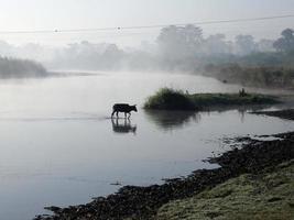 Chitwan Nationalpark foto