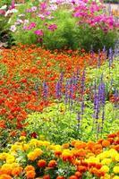 Blumengärten in Thailand foto