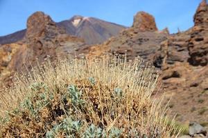 Tenerife Natur