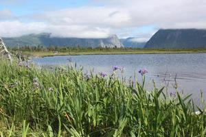 Morgennebel, Gros Mourne, Neufundland, Kanada foto