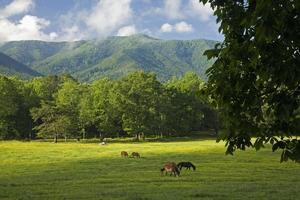 pferde, cades cove, großer rauchiger mtns nat park, tn