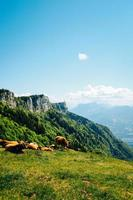 Pferde auf grüner Wiese nahe Berg
