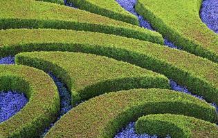 geschnittene Büsche und Blumen foto