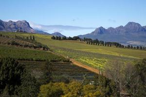 Weinberge in der Stadt Stellenbosch, Südafrika foto