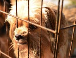 einsamer Hund im Käfig foto