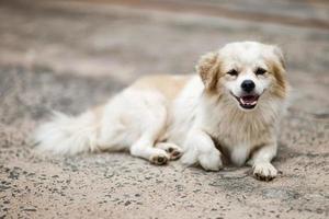 Vietnam leben kleine Hunde