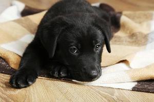 schöner schwarzer Labradorwelpe auf Plaid foto