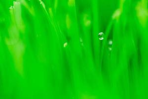Makrobild von frischem grünem Gras foto