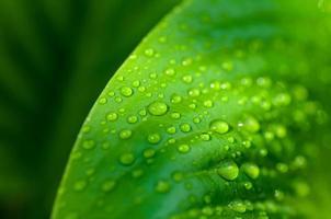 Hintergrund des Wassers fällt auf ein grünes Blatt foto