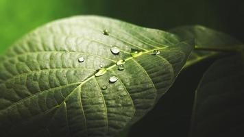 Wassertropfen auf der Blattoberfläche, abstrakter natürlicher Hintergrund