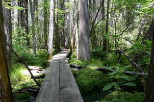 Holzfußweg durch Wald