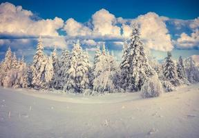 schöne Winterlandschaft in den Karpaten. Ukraine, Europa.
