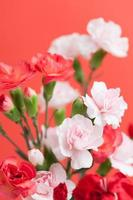 Blume der Nelke foto